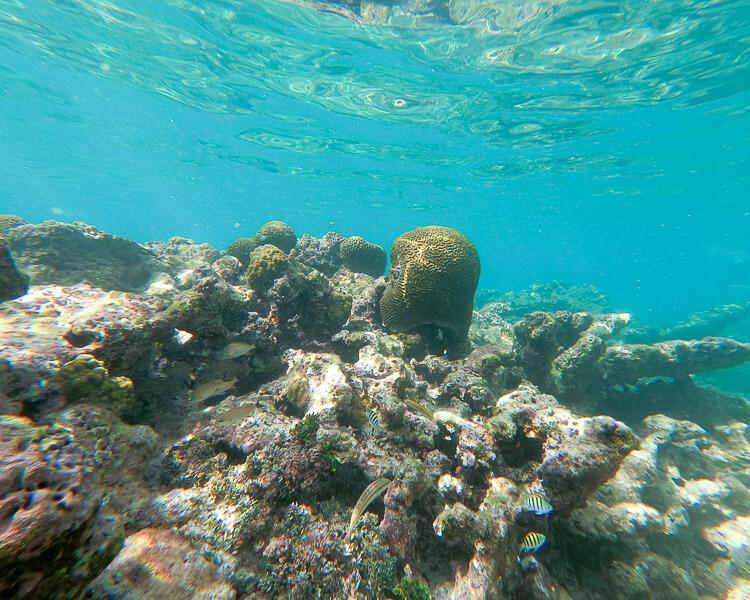 Coral and fish at Sapphire Beach, St Thomas