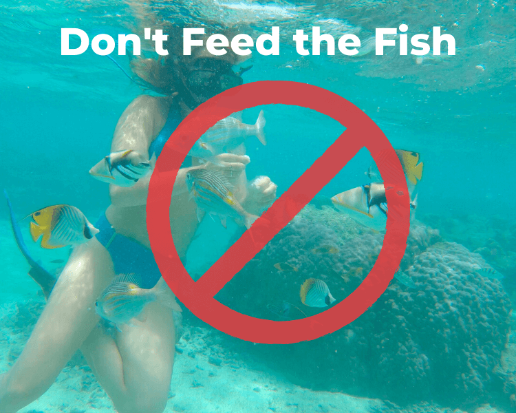 Woman snorkeling and feeding bread to tropical fish.  Text Overlay:  Don't feed the fish with a crossed circle
