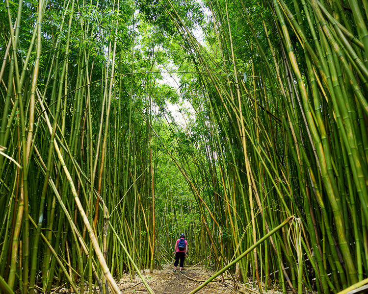 Person walking through Bamboo Forest on Pipiwai Trail, Maui