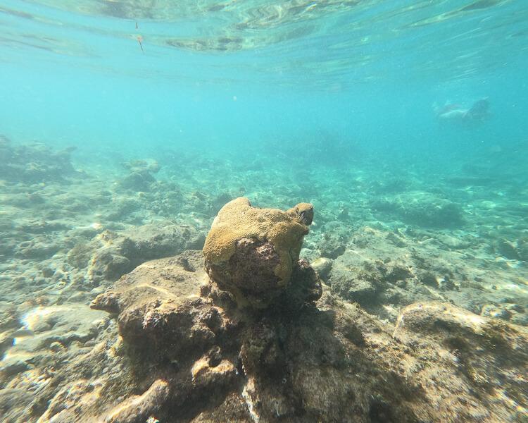 underwater coral at Sapphire Beach