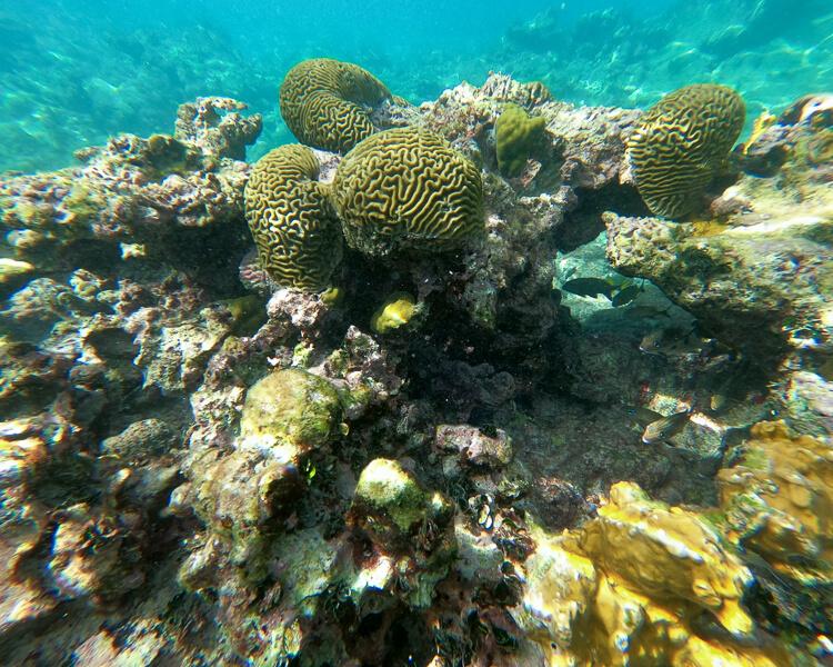 fish at coral at Sapphire Bay St Thomas
