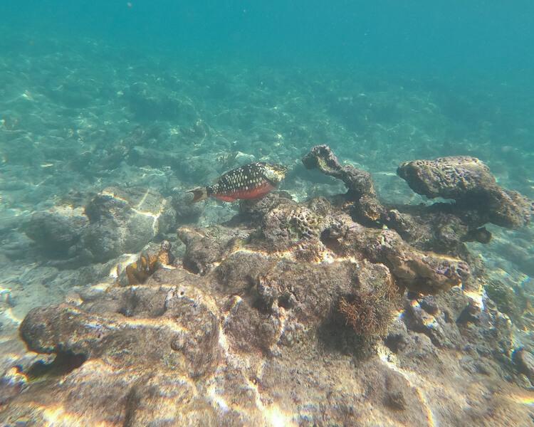 red fish underwater Sapphire Bay
