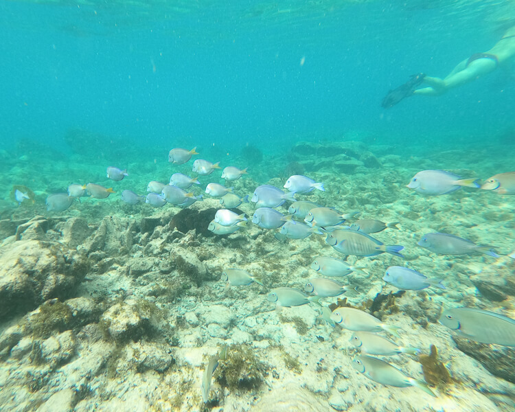 school of fish swimming at Sapphire Bay