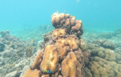 underwater view of reef and fish at Secret Harbor, St. Thomas