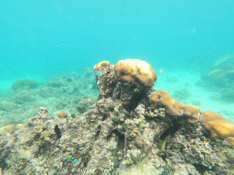 underwater view of reef while snorkeling at Secret Harbor St Thomas