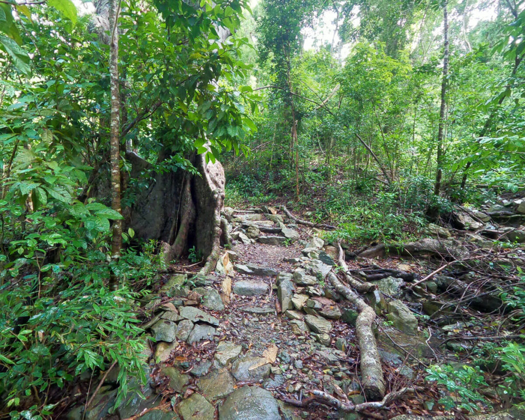 reef bay trail through the vegetation