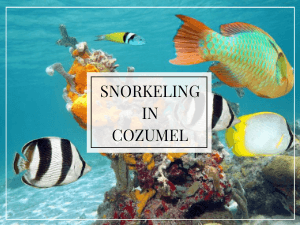 underwater photo of fish and coral with text overlay snorkeling in cozumel