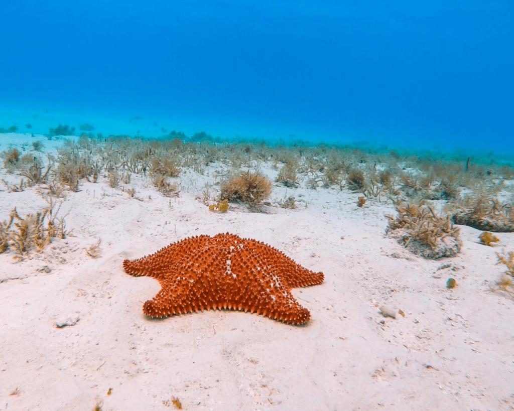 starfish at el cielo near cozumel mexico