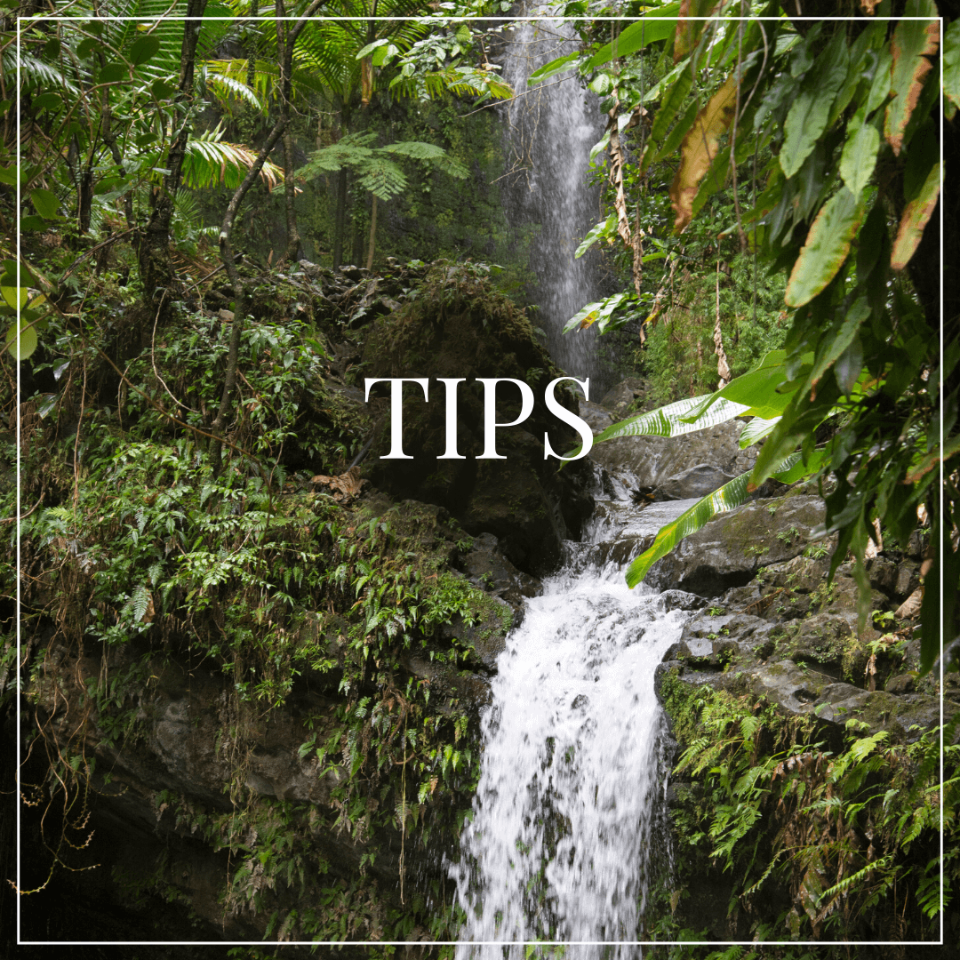 "text overlay ""tips"", rainforest waterfall in background"