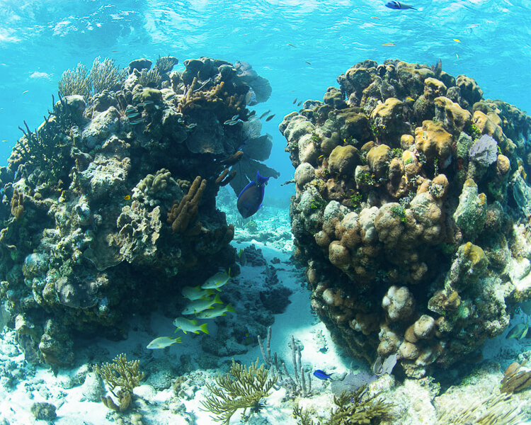 underwater photo of coral and fish at rum point in grand cayman