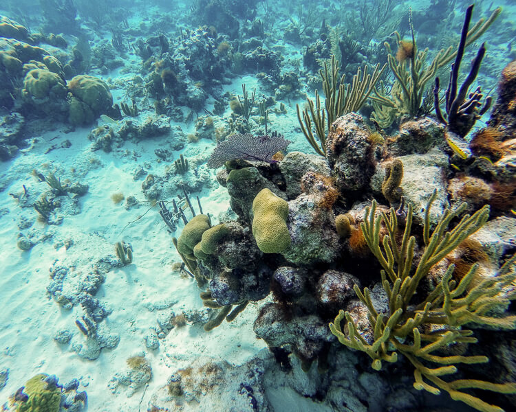 underwater view of coral and fish at Turks and Caicos Marine Park