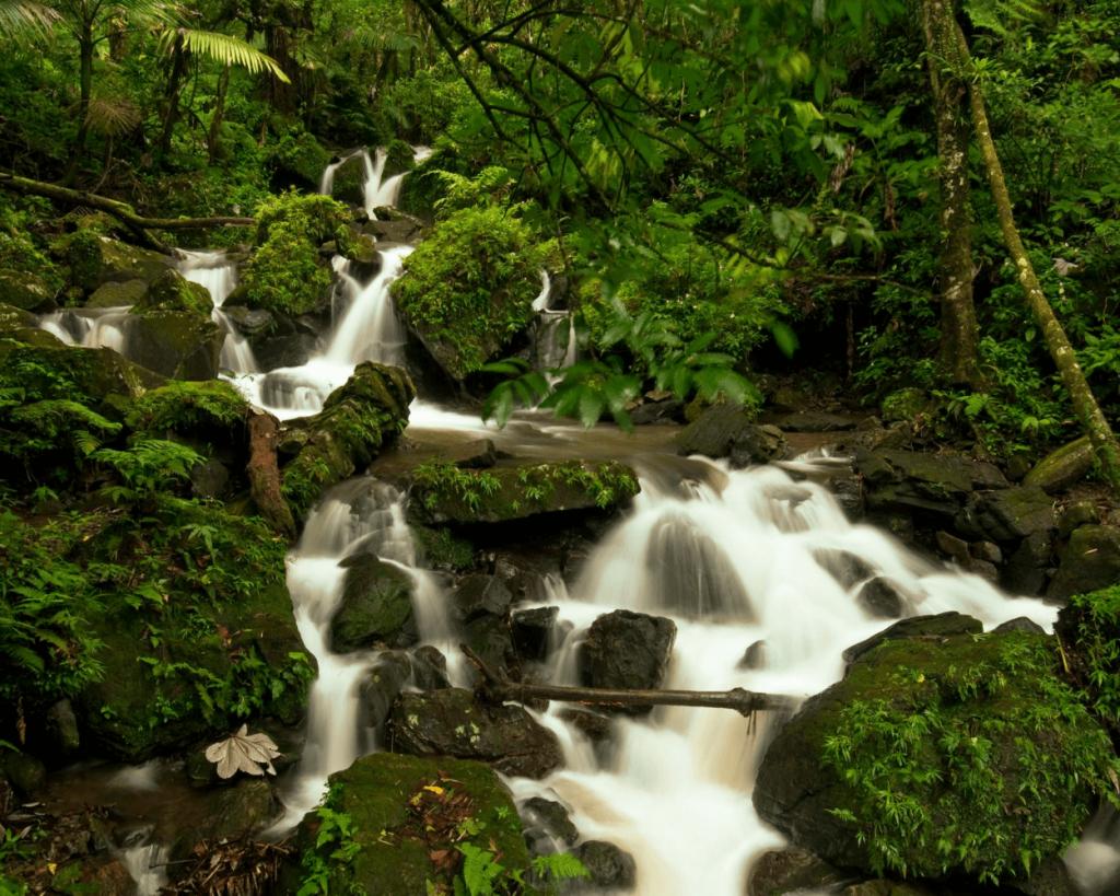 Juan Diego Creek in El Yunque Puerto Rico