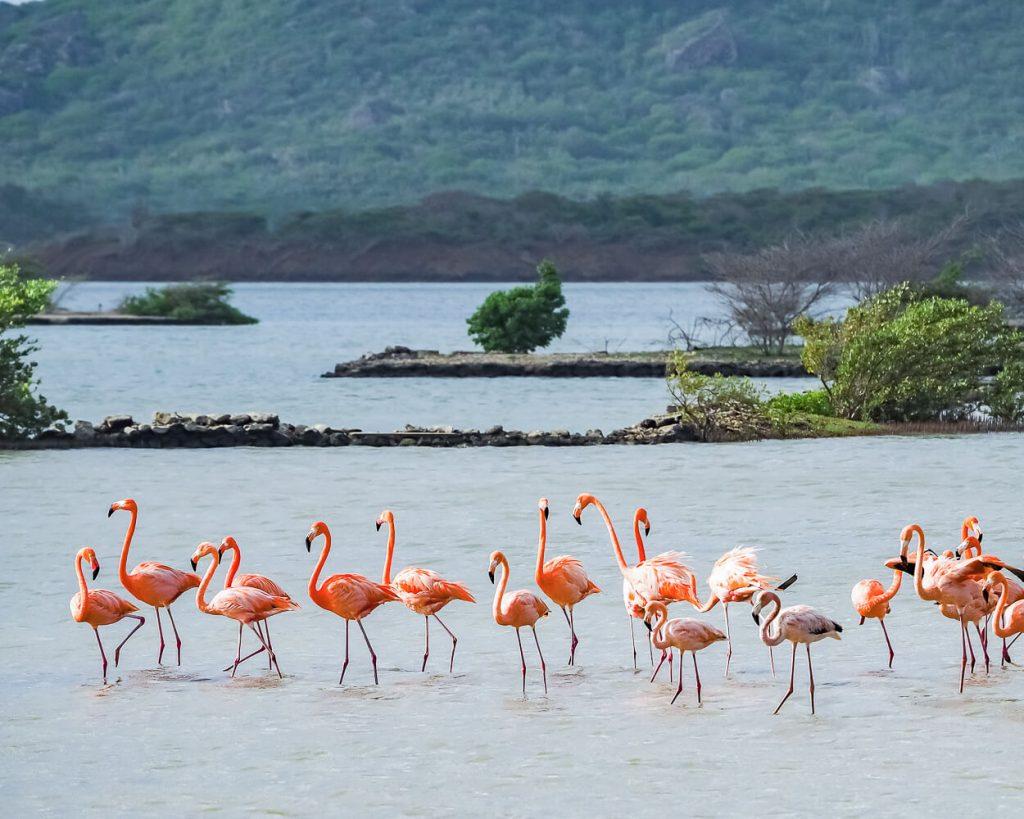Flamingos at Jan Kok