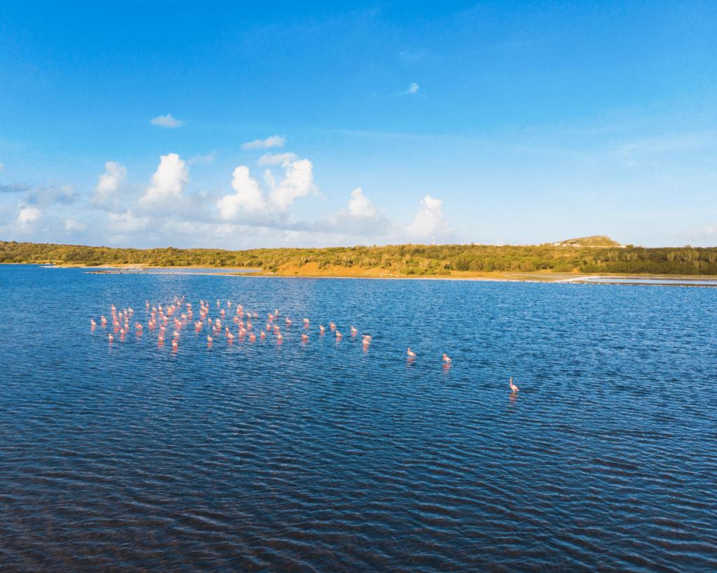 Jan Thiel Salt Flats