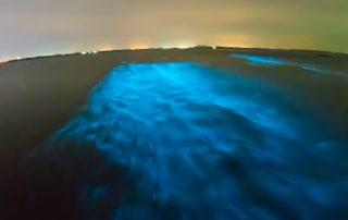 Bioluminescence in water